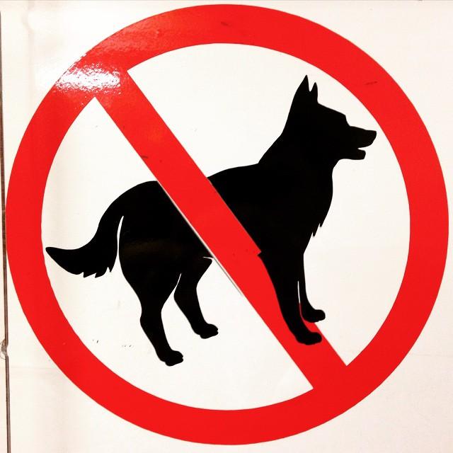 Бейкер торт, вход с животными запрещен картинки с надписями