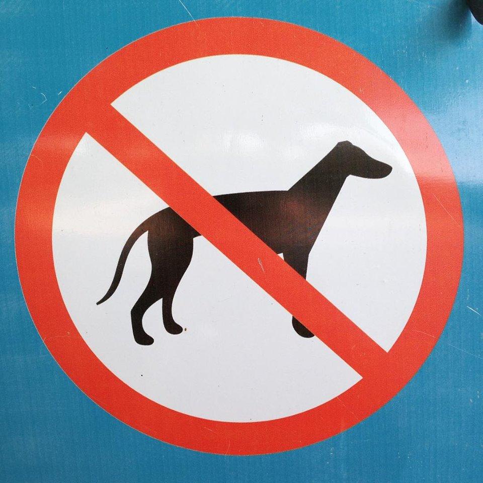 Вход с собаками запрещен табличка картинка, картинки веркой сердючкой